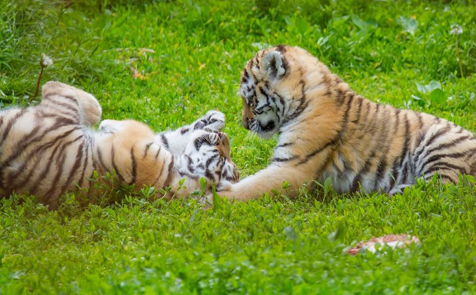 Støt dyrene i Odense Zoo